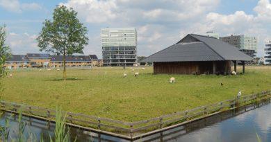 Schaapskooi Groot Zandveld Leidsche Rijn