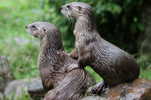 natuurcollege otters steede hoge woerd
