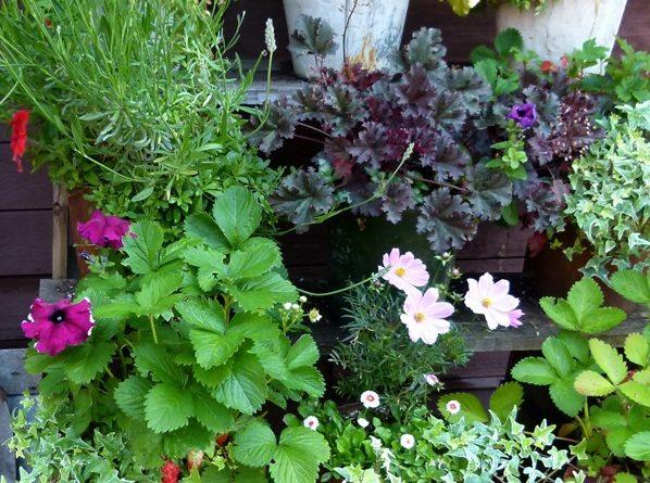 Tuinieren zonder tuin Leidsche Rijn