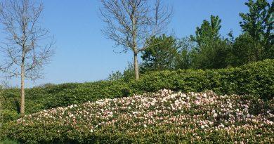 japanse tuin Máximapark Leidsche Rijn